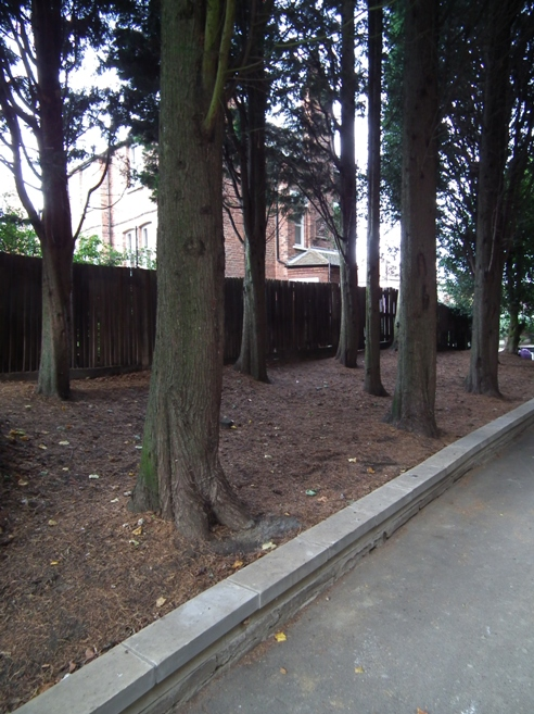 Avenue of Trees in Park House Passage Sep 2013 (c) Dave Milner