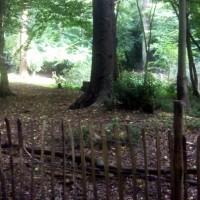 Highgate Wood (c) Della farrant