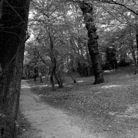 Queens Wood Highgate (c) Dave Milner
