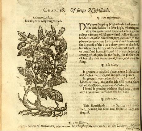 """Page from """"The herball or, Generall historie of plantes gathered by John Gerarde"""". Published 1636 With thanks to openlibrary.org"""